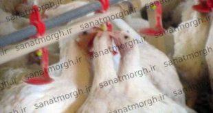 فروش آبخوری اتوماتیک ارزان صنعت مرغ