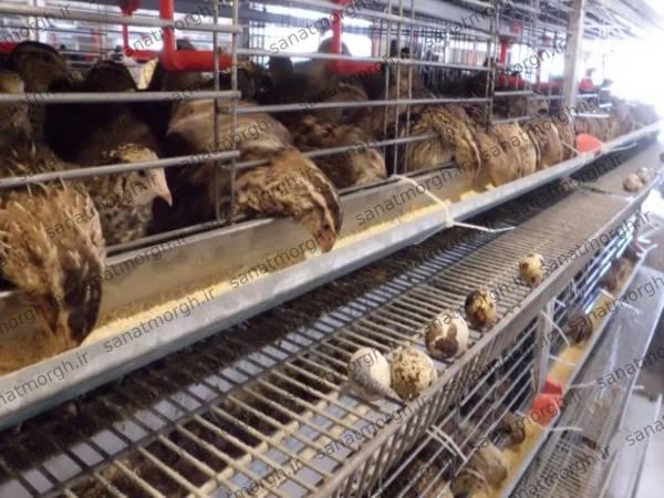 خرید دانخوری اتوماتیک صنعت مرغ