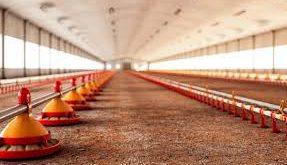 سیستم دانخوری مرغداری در بازار