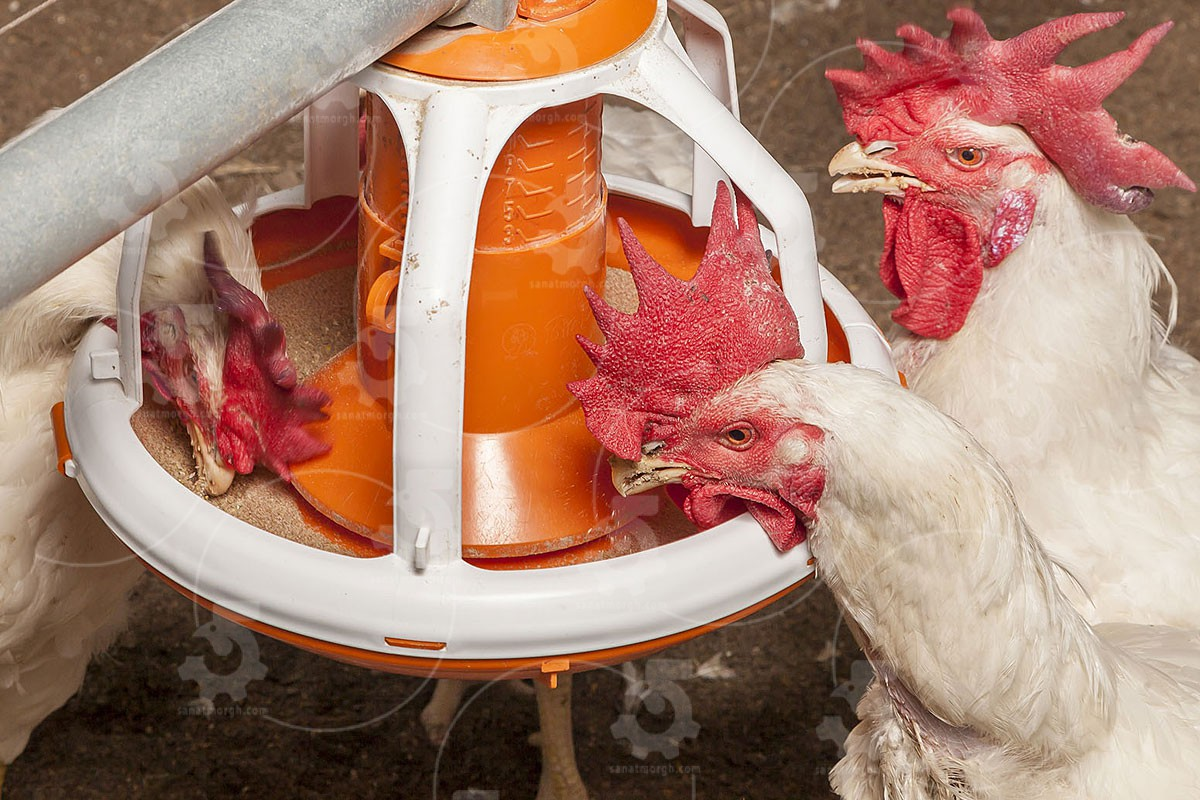 تولید کننده جدیدترین دانخوری مرغداری