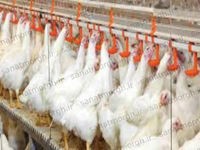 آبخوری نیپل مرغداری صنعت مرغ