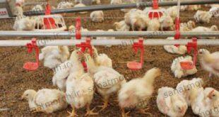 خرید آبخوری نیپل صنعت مرغ
