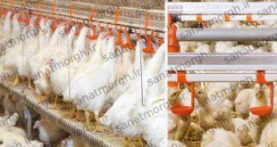 فروش آبخوری نیپل صنعت مرغ