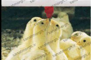 تولید سیستم آبخوری مرغداری صنعت مرغ