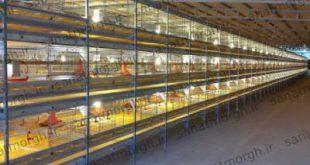 فروش قفس تمام اتوماتیک صنعت مرغ