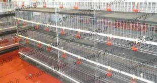 خرید قفس پرورش مرغ صنعت مرغ