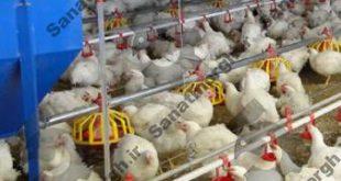 تجهیزات مرغداری گوشتی