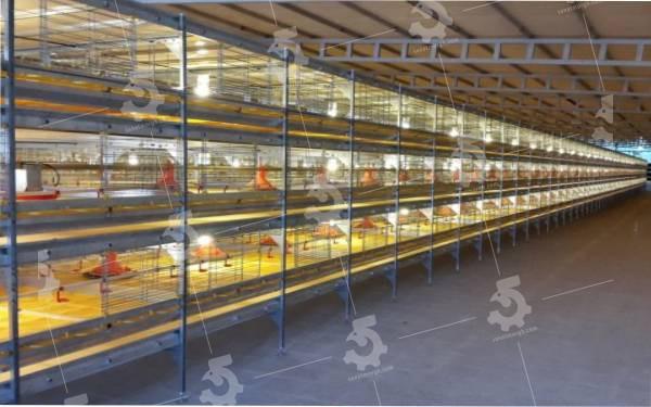 قیمت قفس مرغ گوشتی