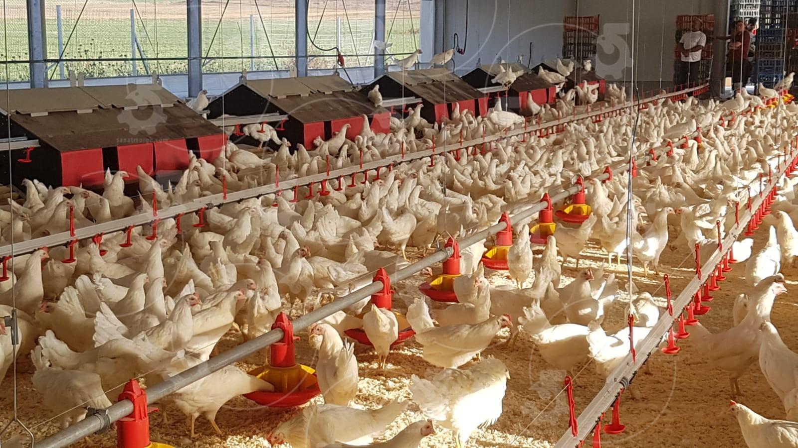 قیمت تجهیزات مرغداری تخمگذار