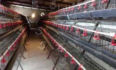 فروش قفس مرغ تخمگذار دست دوم
