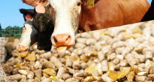 تولید خوراک دام و طیور