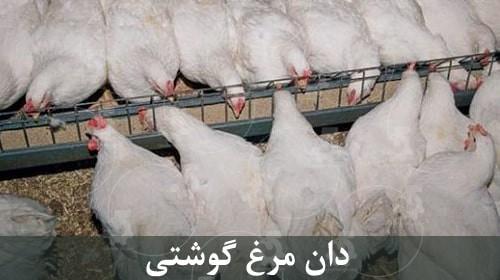 غذای مرغ گوشتی